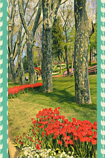 ❤️🌿☘️🌺🌷 Flower Tree Growth Nature Beauty In Nature Grass Green Color Tree Trunk Summertime🌼🍃🌺🌷☘️🌿😍✨ Park - Man Made Space Day Tranquility Outdoors Tranquil Scene No People Flowerbed Scenics Branch Freshness Amazing View Blooming City Environment