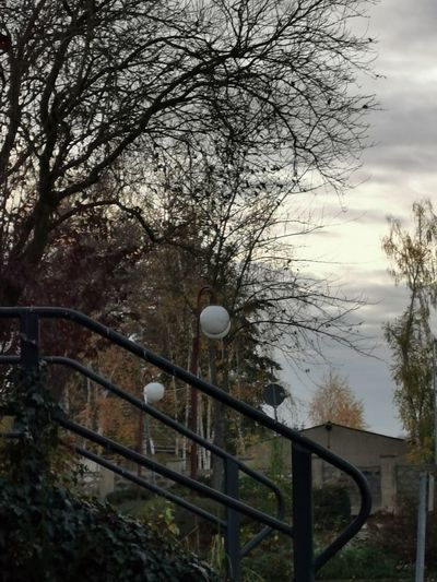 Street light by bare trees against sky