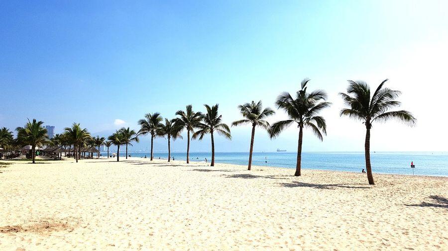 Da Nang Beach Mykhebeach My Khe Beach Da Nang Beach Vietnam Beach Coconut Tree Tree Water Palm Tree Sea Beach Sand Blue Summer Tropical Climate Island