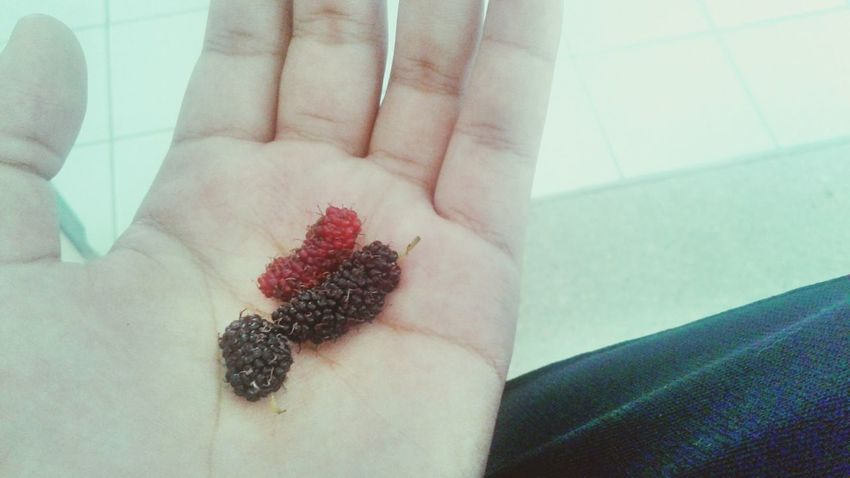food fruit Mulberry