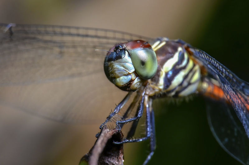 Close-up of dragonfly on hand