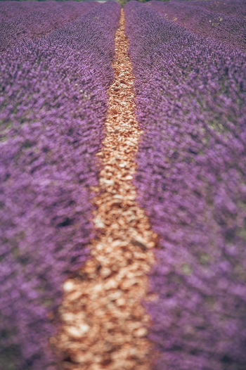 Close-up of purple flowering plants on road