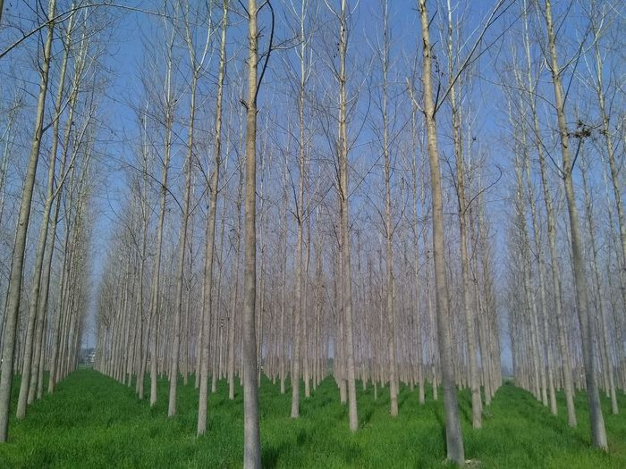 Panoramic shot of trees on field against sky