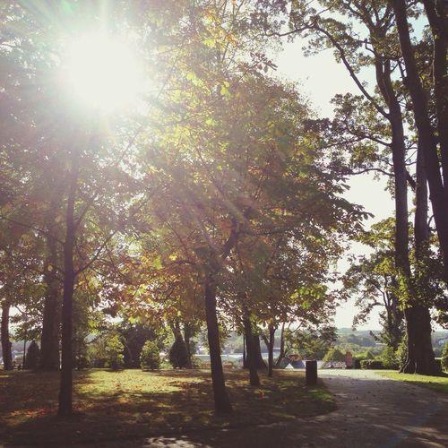 Autumn morning in Castle Gardens, Lisburn Northern Ireland