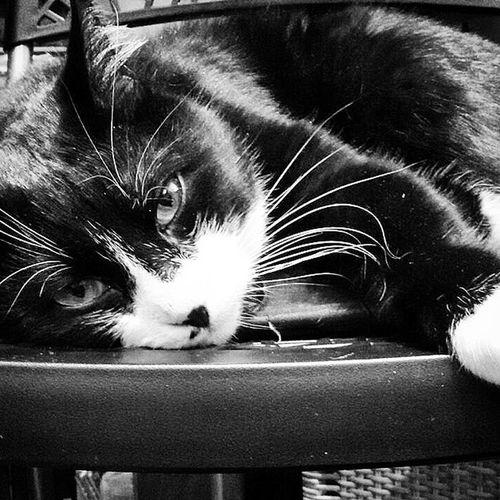 Emotion Relax TBT  Turin Torino Torinocat Instagram Igers Ig_piemonte Ig_torino Implus_daily Instafamous Instamood Instacat Instagood Orfeo Photographer Photooftheday Petoftheday Star Dailyphoto Gattone Hastag  Love Cat catlovercatsgram whiteandblackcatcatlovercatoftheday