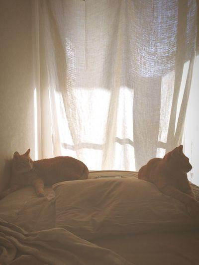 今日も1日頑張ろう。 Cat Hello World