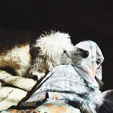 Maine Daytime Cute Hanging Out Labradoodle Dog Love On Leg Rescuedog Homer❤️ Abused Dog Simple Pleasures In Life Inside Sunlight And Shadow Relaxing Content Home Eyeem Collection
