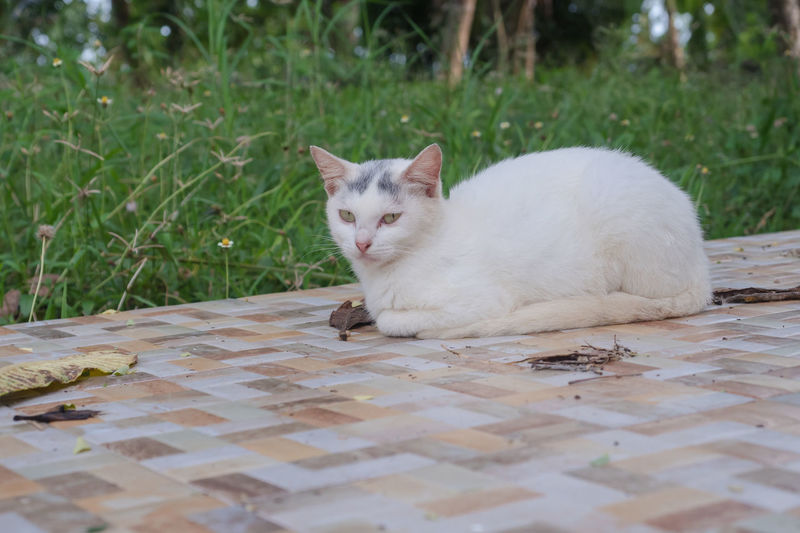 Portrait of a cat resting on grass