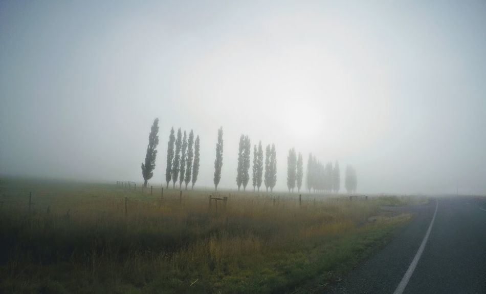 Atmospheric Mood Beauty In Nature Foggy Weather Grass Impressive View Landscape Mountains Nature New Zealand No People Outdoors Roadside Scenics Sky Tranquil Scene Tranquility Tree Siloutte Trees