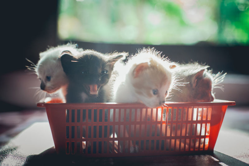 Close-up of kittens in plastic basket