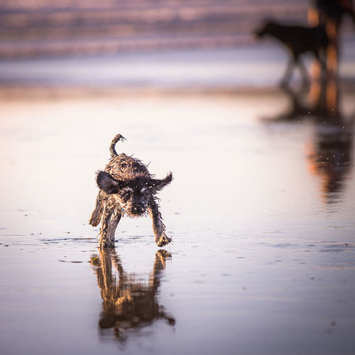 Close-Up Of Puppy On Beach
