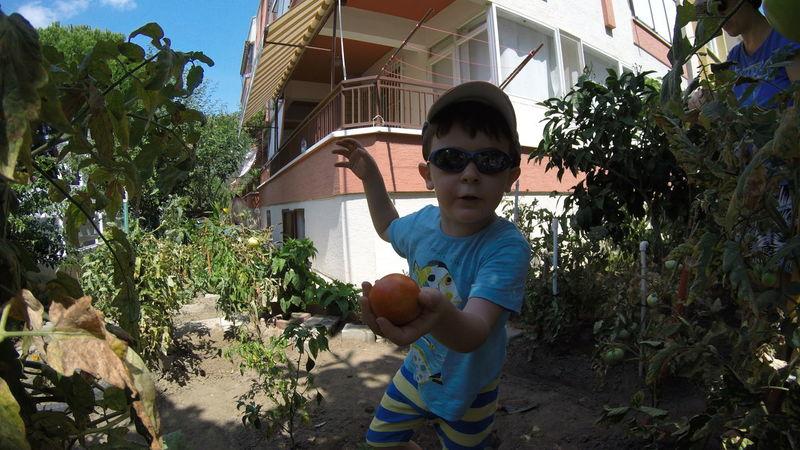 Child Childhood Day Gardening Gopro Hero4 One Person Organic Organic Gardening Outdoors Picking Tomatoes Tomatoes