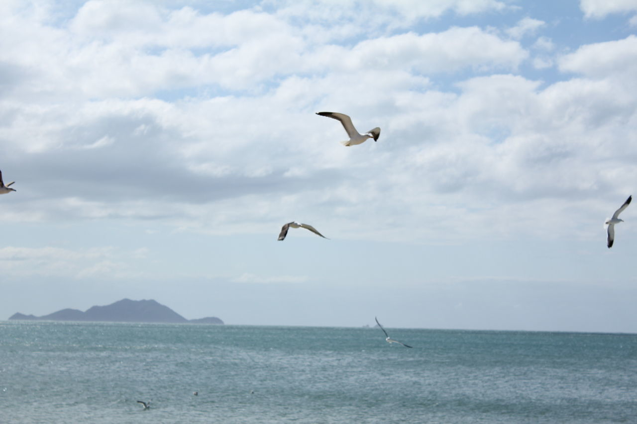 flying, bird, sky, nature, mid-air, sea, animal themes, animals in the wild, day, water, cloud - sky, spread wings, scenics, outdoors, beauty in nature, waterfront, tranquility, one animal, horizon over water, animal wildlife, no people