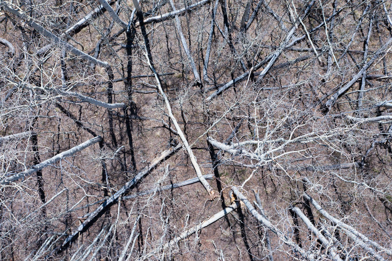 Full frame shot of bare trees in winter