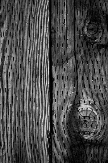 Man interfering with Nature Monochrome Photography The Week On EyeEm TheWeekOnEyeEM EyeEm Nature Lover Be. Ready. EyeEmNewHere Wood - Material Tree Trunk Tree Textured  Rough Patterns Pattern Outdoors Nature Close-up Blackandwhite Photography Blackandwhite Textures And Surfaces Black & White Crafted Beauty