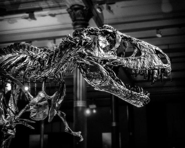 Low angle view of dinosaur skeleton