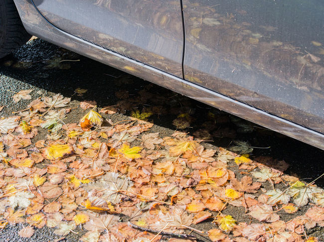 Autumn leaves on the street Autumn Autumn Colors Autumn Leaves Avenue Caution Country Road Driving Traffic Car Damp Danger Danger Of Slipping Dangerous Foliage Leaf Leaves Mushy Outdoors Safety Season  Slippery Smooth Transportation Wet