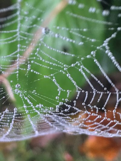 Spider webs fall nature Beauty In Nature