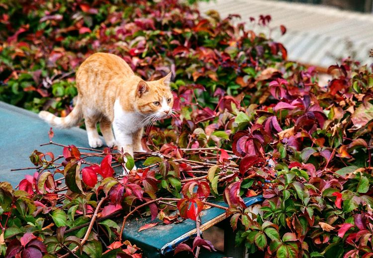 Cat sitting on a flower
