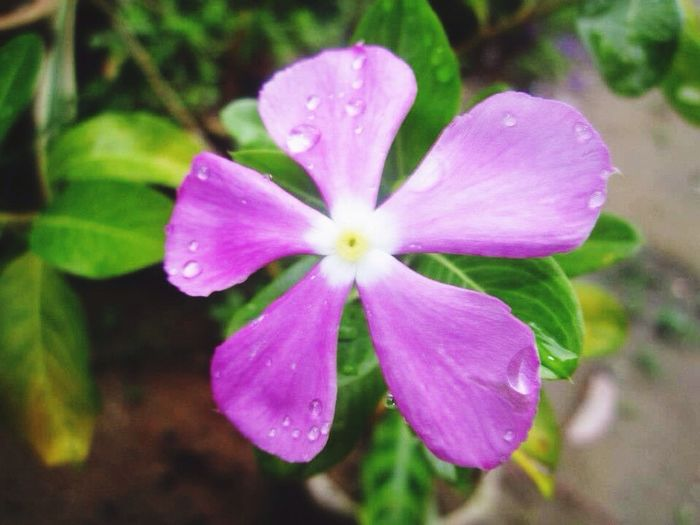 Will you be my flowers? Flower Beauty In Nature Nature Petal Growth Plant Freshness Blooming First Eyeem Photo EyeEmNewHere