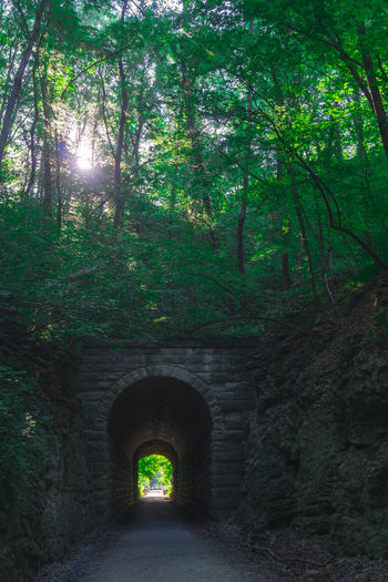 Arch Arch Bridge Arched Architecture Bridge Built Structure Connection Day Direction Forest Green Color Growth Land Light At The End Of The Tunnel Nature No People Outdoors Plant Road Stone Wall The Way Forward Transportation Tree Tunnel