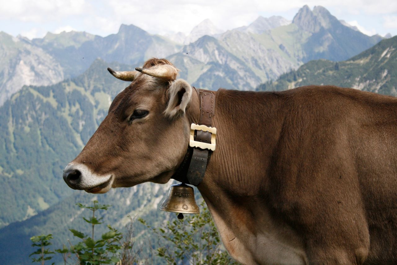 Rocky Mountain National Park Animals Handlebar Bike Bell