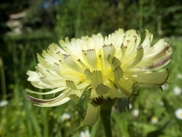 Garden Flowers Yellow Flower Beauty In Nature Fleurs Flower Flowers Garden Photography Jardin