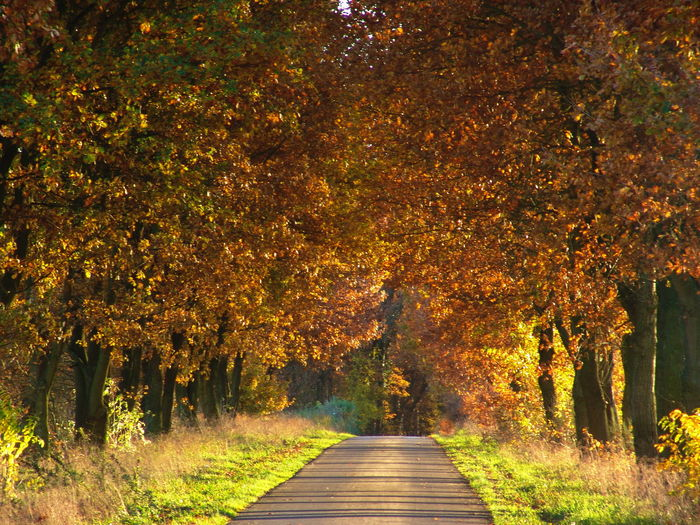 Betterlandscapes Betterlandscapes The Way Forward Footpath Nature Tranquility Tree Plant Beauty In Nature Autumn Direction Change No People Tranquil Scene Orange Color Forest Road Leaf Diminishing Perspective Land Growth Scenics - Nature
