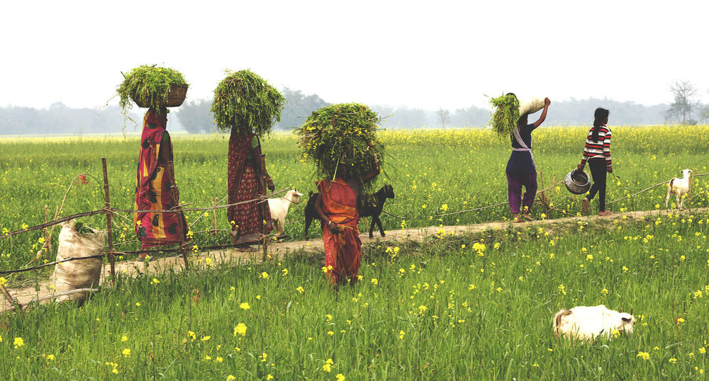 Agricultural Land Agriculture Animal Themes Beauty In Nature Grass Green Color Hardwork Mammal Nature Outdoors People Real People Rural Scene Togetherness Village Life Working Women