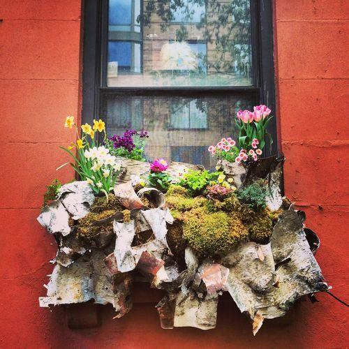 NYC Windowbox Change Colorful Dog Flowers NYC Reflection Window Windowbox