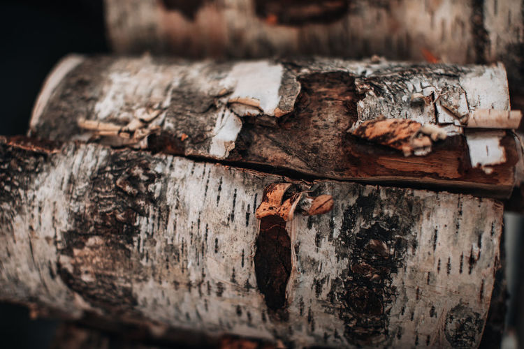 Close-up detail of chopped logs of a tree tied with a rope. background with natural texture. rustic