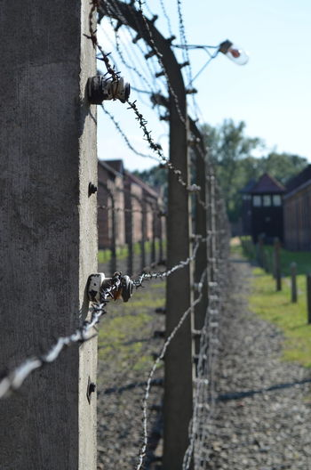 Auschwitz  Barbed Wire Concetration Camp Pain Your Ticket To Europe Fence Wire First Eyeem Photo
