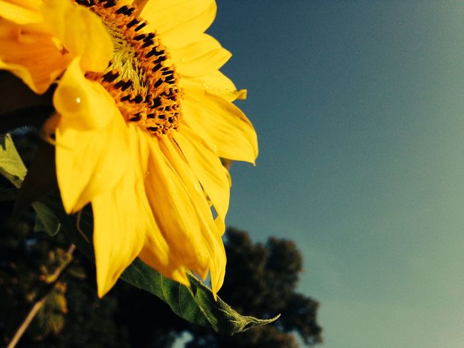 Sideout Flowers Summer Summer Views Eye4photography  EyeEm Nature Lover Summer Vibes