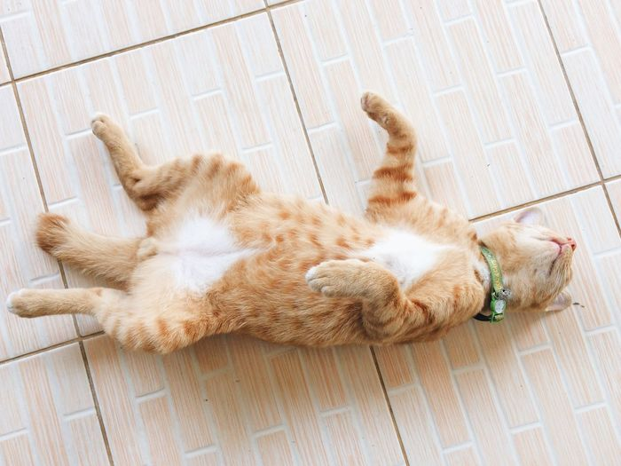 High angle view of cat sleeping on tiled floor