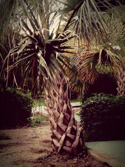 Palm Trees Hello World