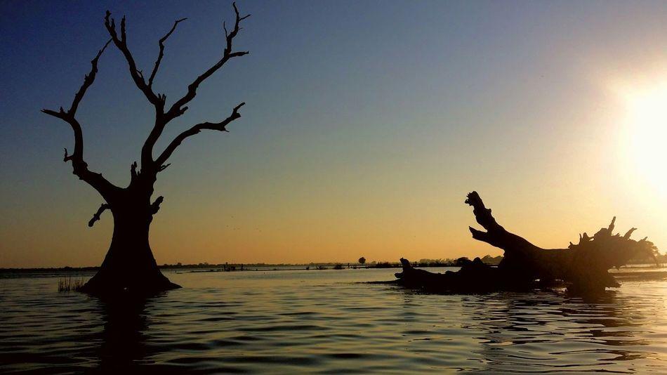 The sunset makes those dead trees more temp and drama. Taking Photos Check This Out Eyemphotography Beautiful Nature EyeEm Enjoying Life The _ Mazzalong Sky Sunset Lovers Ubeinbridge Myanmar Mandalay