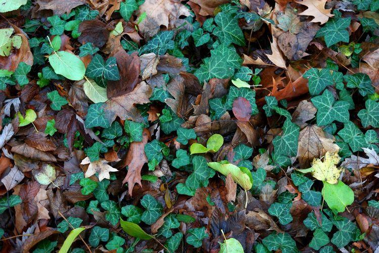 Full frame shot of dry leaves on land
