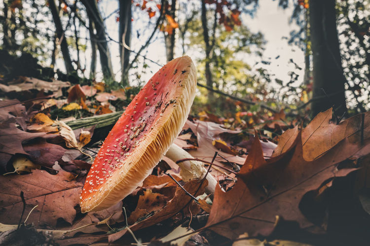 Plant Tree Plant Part Leaf Nature Close-up Autumn Day Focus On Foreground Land Food No People Change Growth Dry Forest Beauty In Nature Mushroom Fungus Field Outdoors Leaves Toadstool