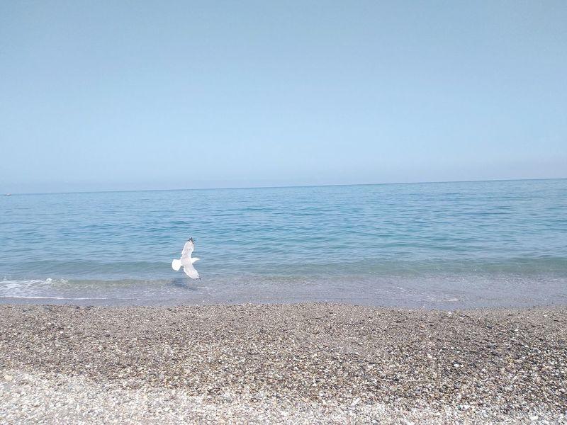 Bird Water Sea Wave Swimming Beach Sand Seagull Pets Swan