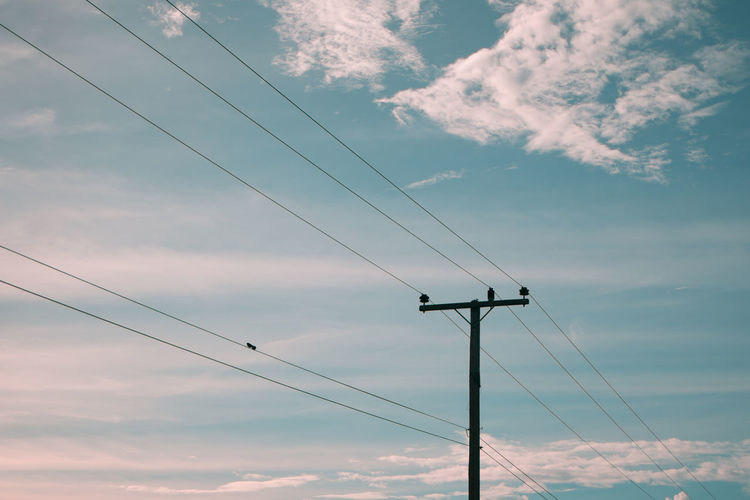 A pair of birds on electricity pole