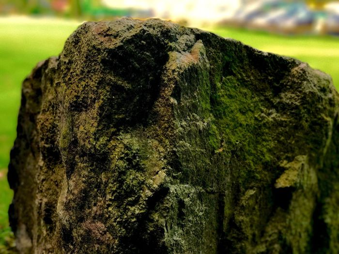 Focus On Foreground Textured  Close-up Rough Nature Day Tree Trunk Moss Outdoors No People Tree Growth Shotwithiphone7plus Shotoniphone7plus