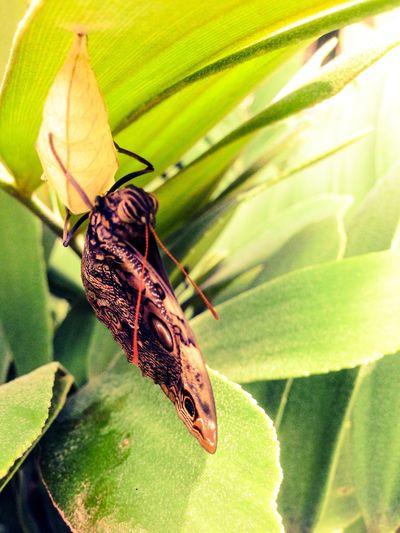 You Name It Animal Themes Insect Animals In The Wild One Animal Leaf Wildlife Nature Green Color Close-up Animal Wildlife Plant Butterfly - Insect Day No People Outdoors Beauty In Nature Growth Perching Freshness