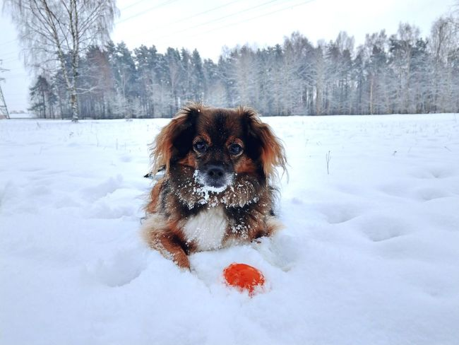 dog Dog Snowflake Ball Snowing Frost