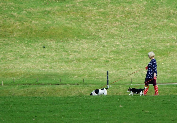 Full length of woman walking with dogs on field
