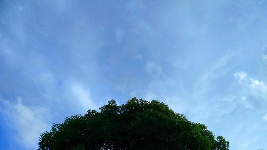 Sky Tree Nature First Eyeem Photo