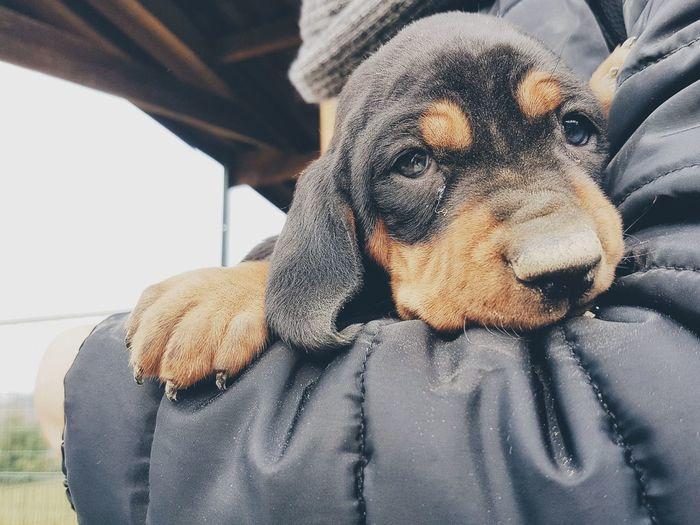 Close-up portrait of puppy