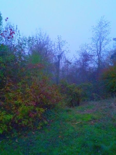 Relaxing Misty Day Blue Fog Early Morning Nature Italy Spring Into Spring