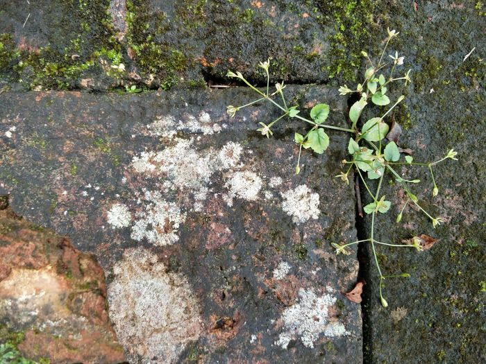 #oldwall #wall #nature Leaf High Angle View Close-up Plant Growing Fungus Lichen Young Plant