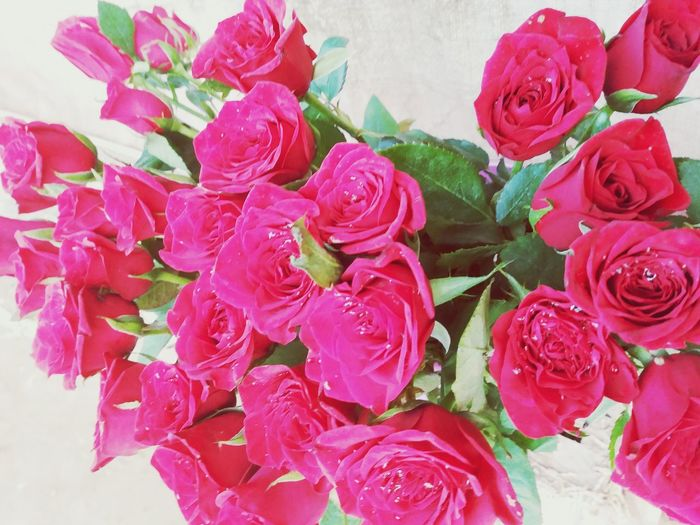 Spots on Red Roses Flowers Bouquet Red Flower