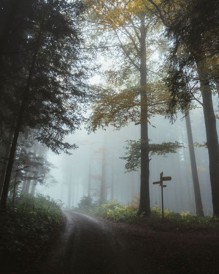 Tree Plant Fog Growth Forest Road Nature Coniferous Tree Scenics - Nature Direction The Way Forward Non-urban Scene Tranquil Scene Outdoors Transportation No People Beauty In Nature Tranquility Day Land